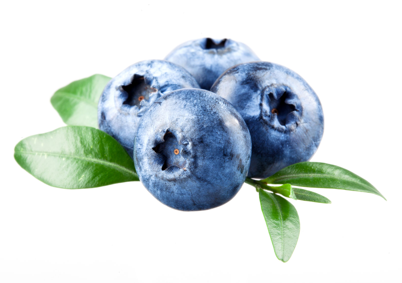 blueberry improves cognition in middle age adults