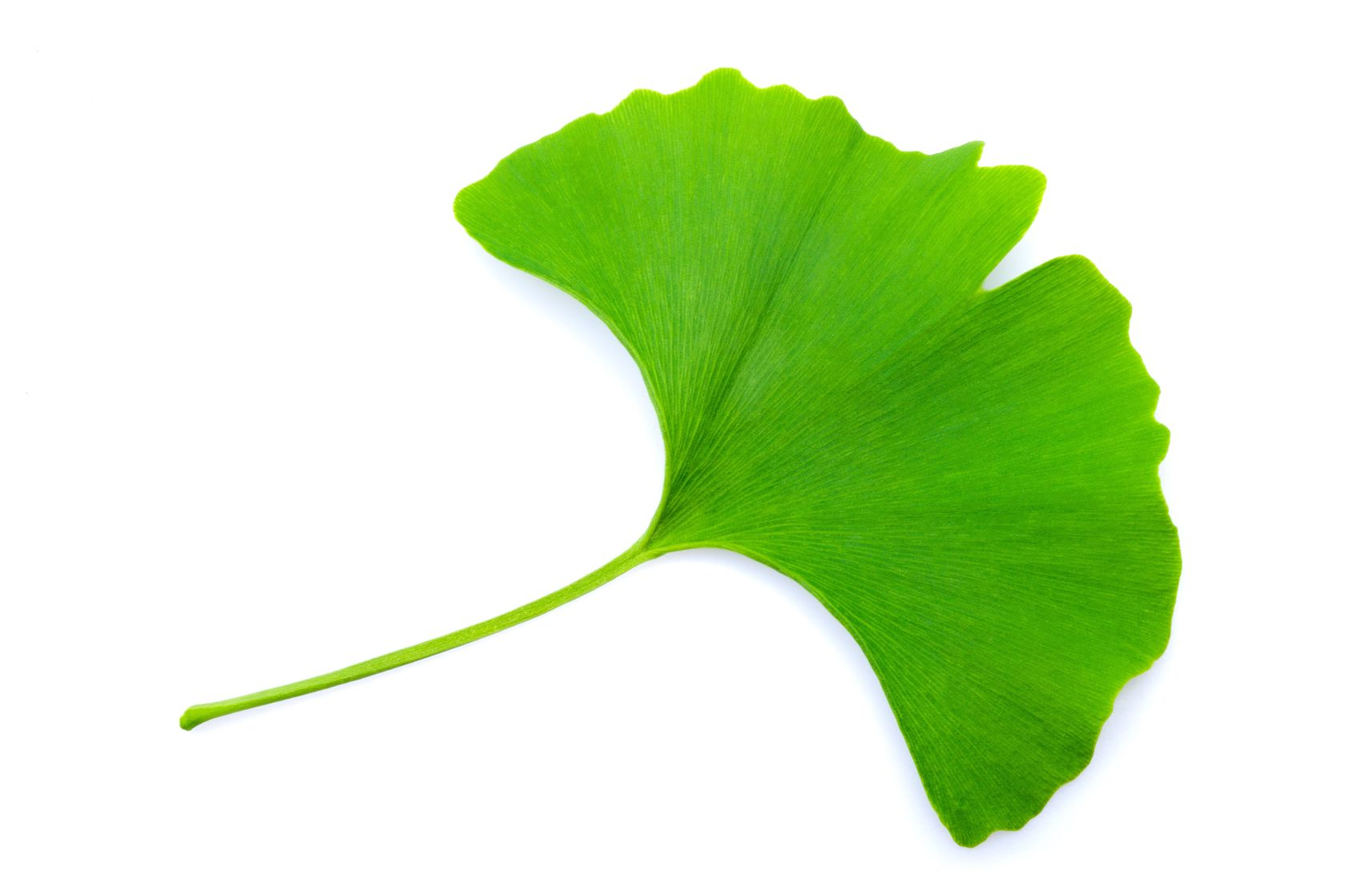 Ginkgo improves stroke recovery