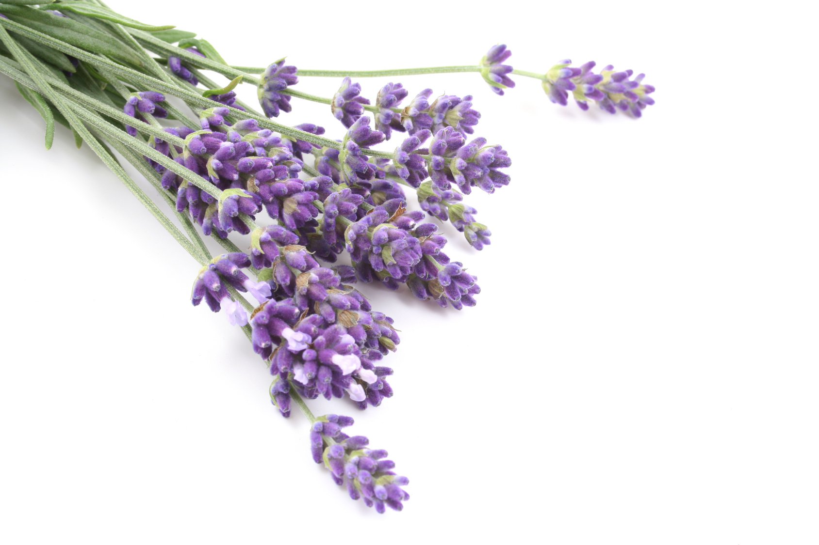 lavender essential oil improves anxiety