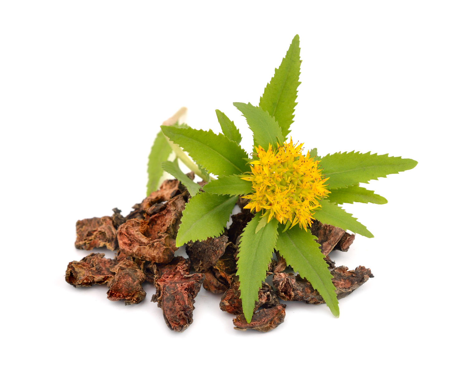 rhodiola helps stress, anxiety, depression, burnout, energy, CFS, premature ejaculation