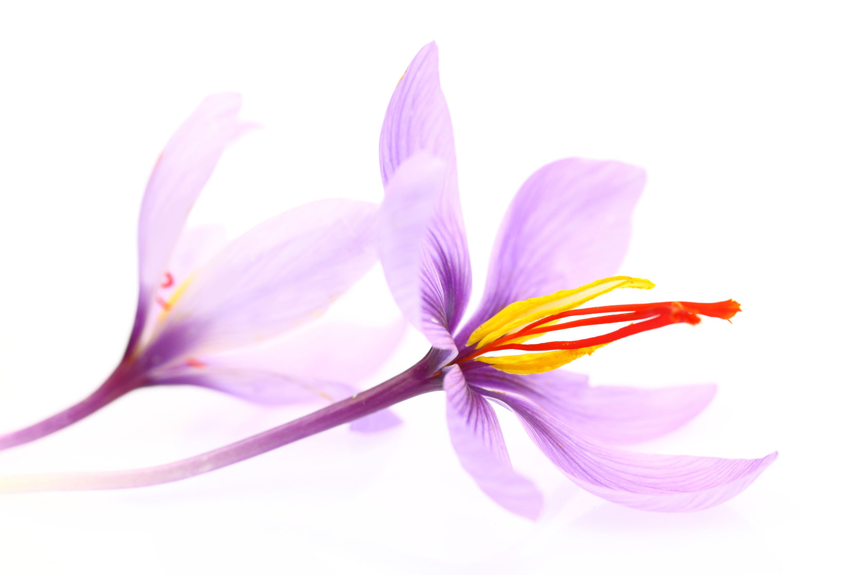 saffron relieves hot flashes and depression in menopausal women