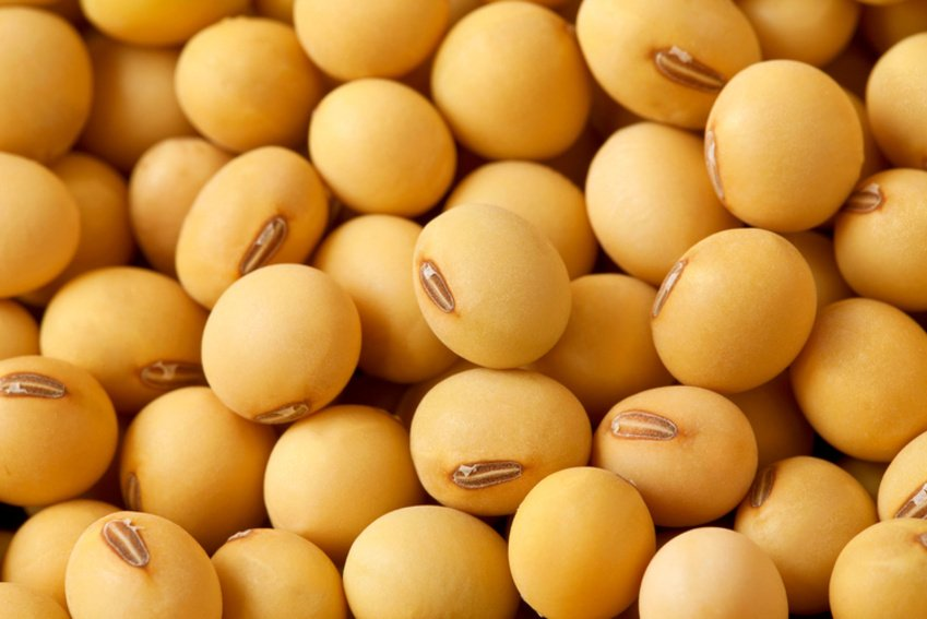 soy prevents death in women with breast cancer